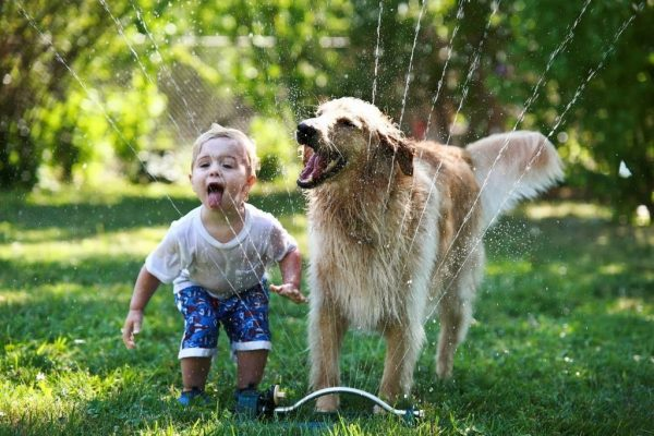 Мальчик и собака играют с водой