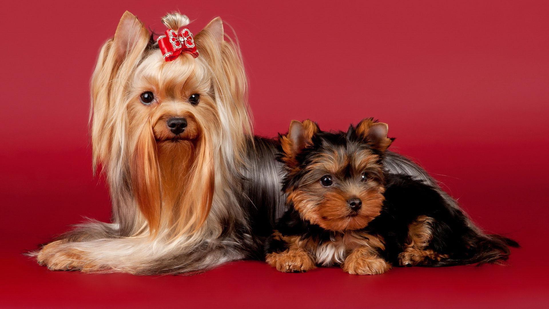 Фото и названия пород маленьких собак