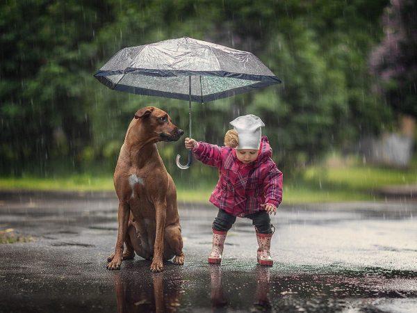 Собака и девочка под зонтом