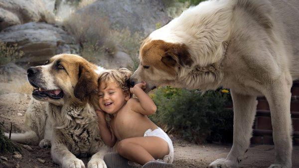 Две собаки и малыш