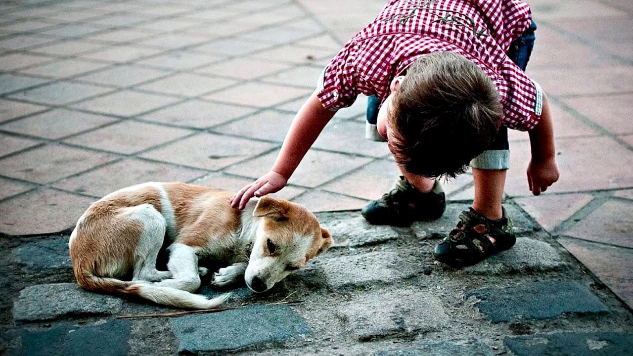Картинки сострадание для детей