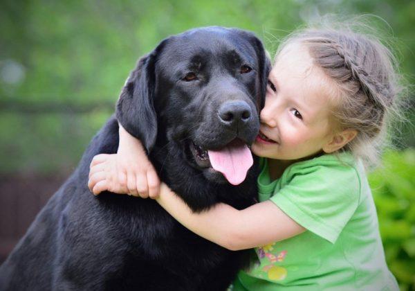 Лабрадор и девочка