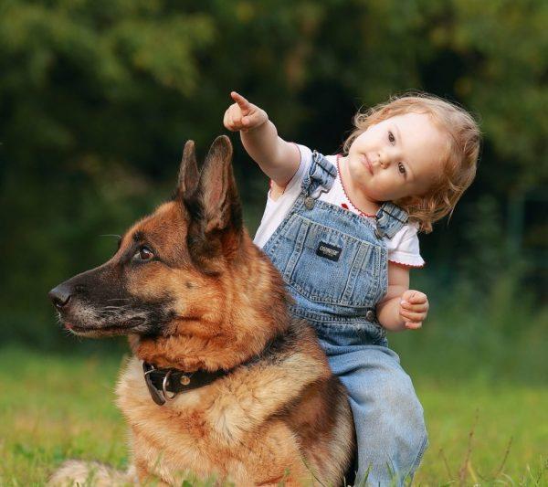 Немецкая овчарка и малышка