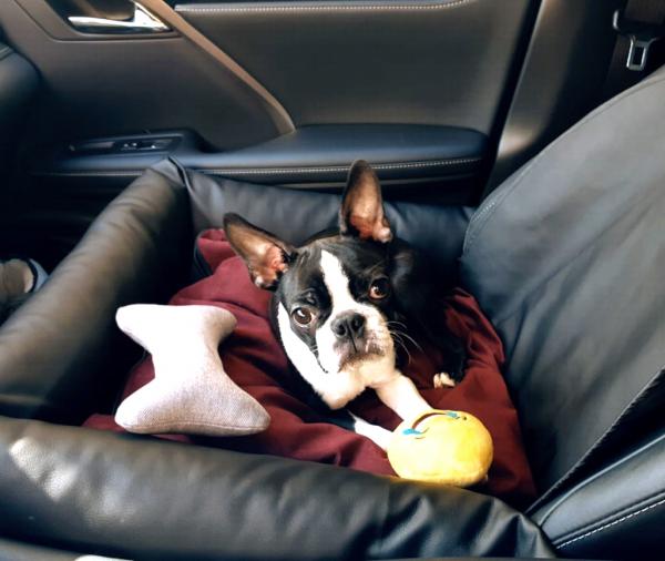 Собака лежит на своей подстилке на переднем сидении автомобиля