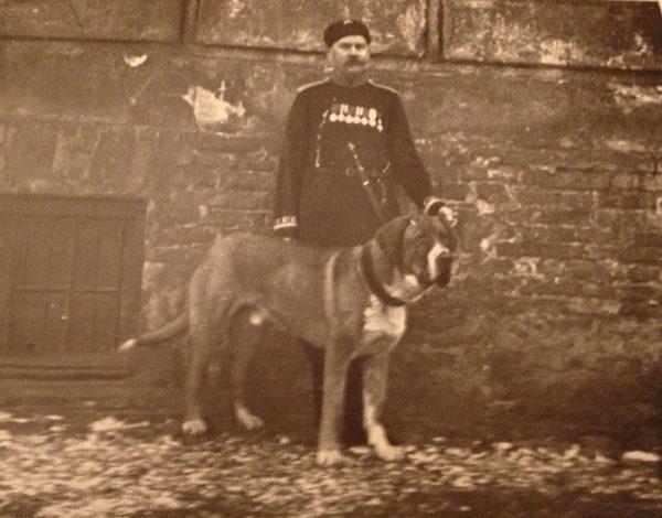 Меделянская собака
