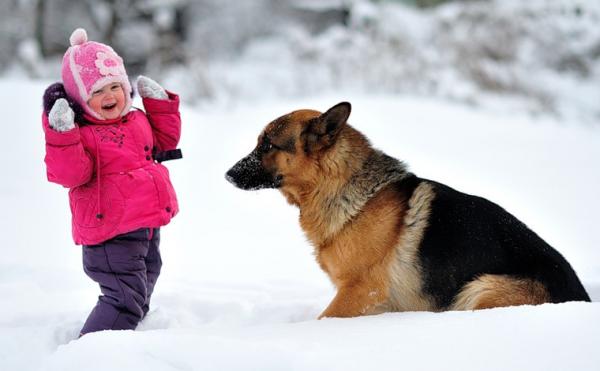 Овчарка с ребёнком