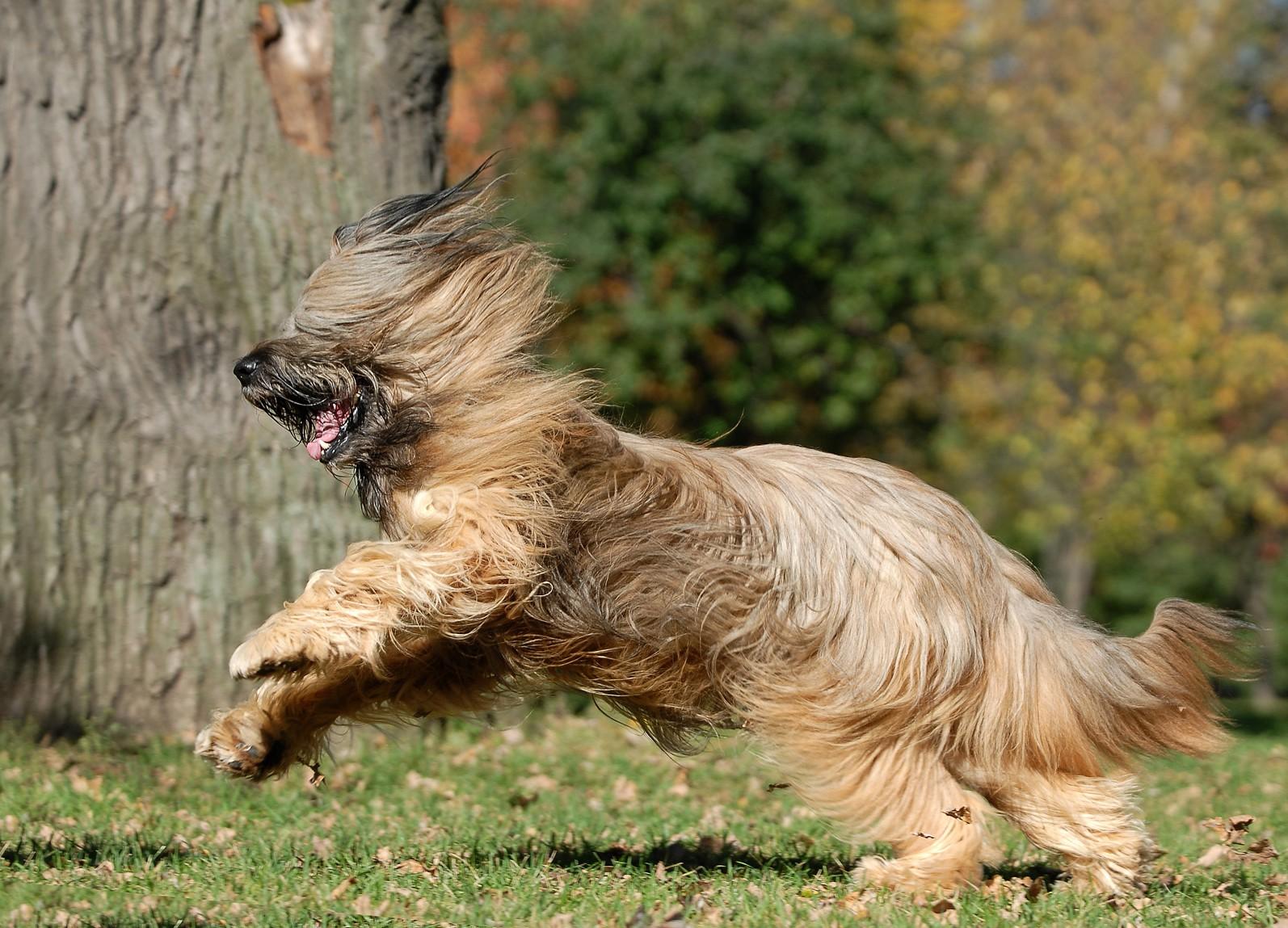 фото собак бриары энергия никогда