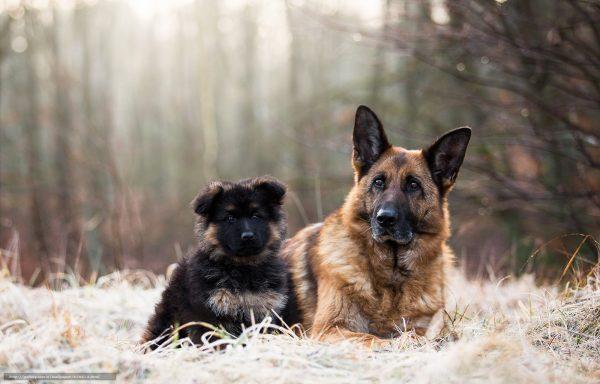 Собака с щенком в лесу