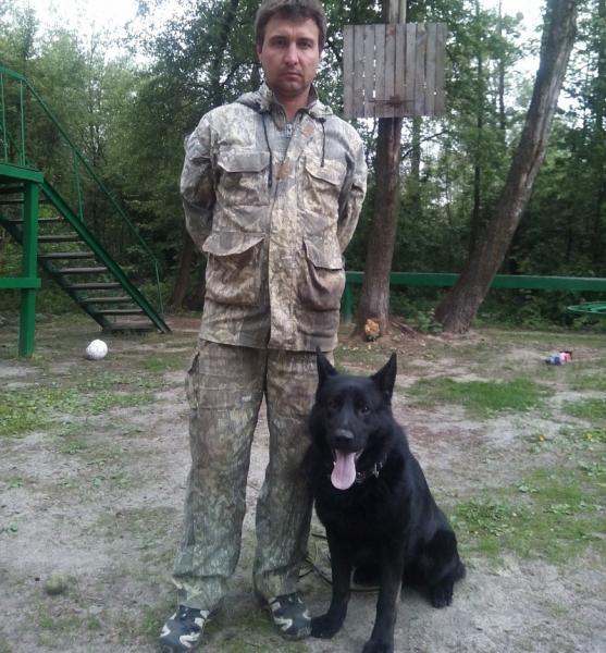 Чёрная немецкая овчарка на дрессировке